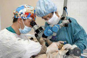 Доктор делает операцию
